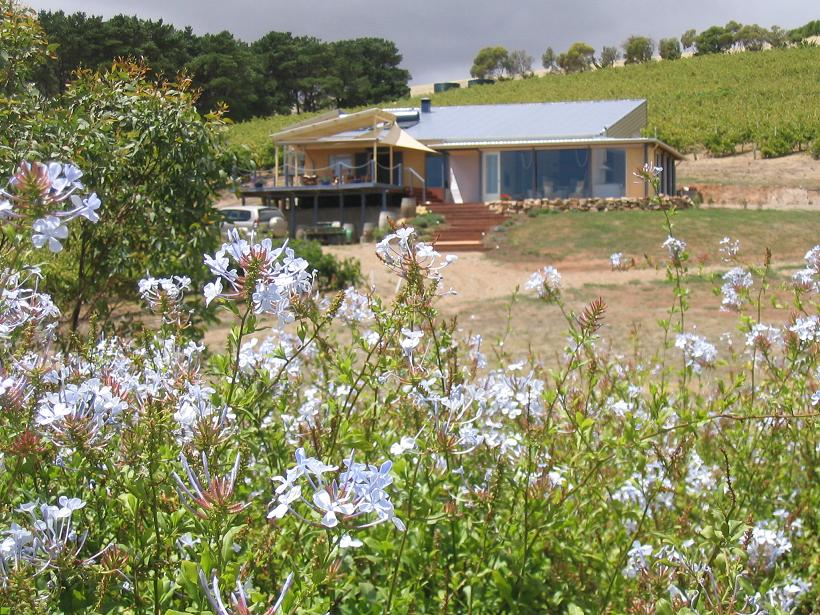 The Blue Grape Vineyard Accommodation