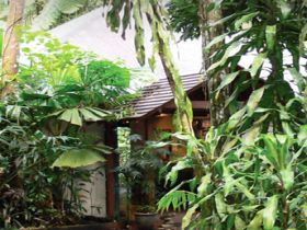 Heritage Lodge and Spa - In the Daintree - Accommodation Fremantle