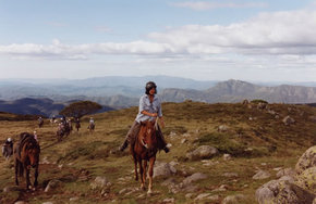 High Country Horses - Accommodation Fremantle