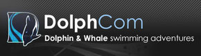 Dolphcom - Dolphin  Whale Swimming Adventures - Accommodation Fremantle