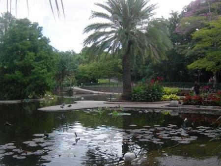 Brisbane City Botanic Gardens - Accommodation Fremantle