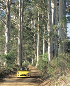 Mount Shadforth Scenic Drive - Accommodation Fremantle
