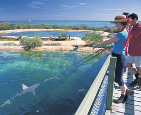 Shark Bay Marine Park - Accommodation Fremantle