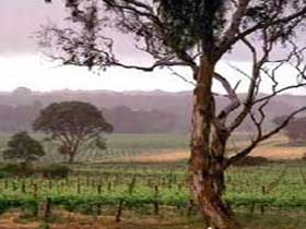 Yangarra Estate Vineyard - Accommodation Fremantle