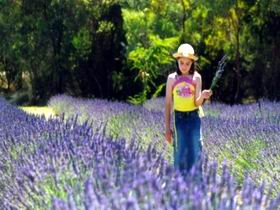 Brayfield Park Lavender Farm - Accommodation Fremantle