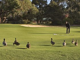 Royal Hobart Golf Club - Accommodation Fremantle