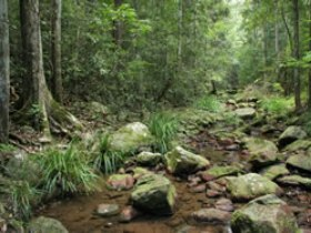 Amamoor State Forest - Accommodation Fremantle