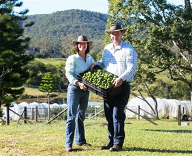 Hinterland Feijoas - Accommodation Fremantle