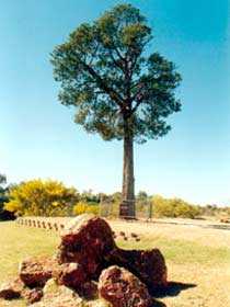 Robbers Tree - Accommodation Fremantle