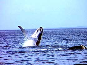 Whale Watching - Accommodation Fremantle