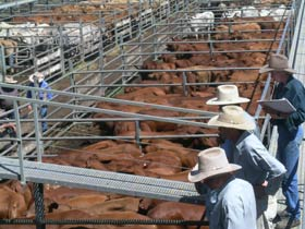 Dalrymple Sales Yards - Cattle Sales - Accommodation Fremantle