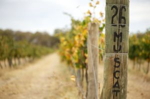 Stanton and Killeen Wines - Accommodation Fremantle