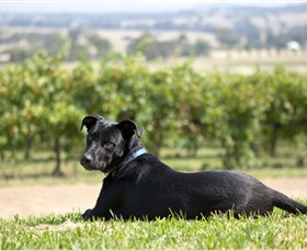 Moothi Estate Vineyard and Cellar Door - Accommodation Fremantle