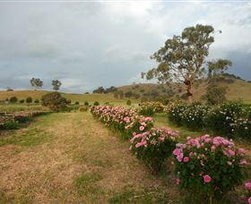 Damasque Rose Oil Farm - Accommodation Fremantle