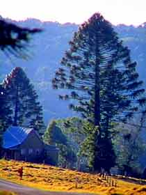 Bunya Mountains National Park - Accommodation Fremantle