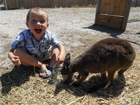 Animal Farm Goolwa - Accommodation Fremantle