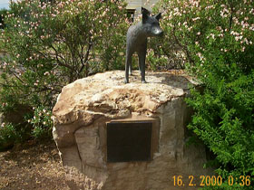 Dingo Statue - Accommodation Fremantle