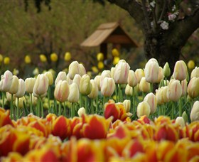 Tulip Top Gardens - Accommodation Fremantle