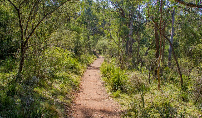 Mares Forest Creek walking track - Accommodation Fremantle