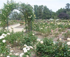 Victoria Park Rose Garden - Accommodation Fremantle