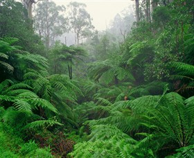 Tarra Bulga National Park - Accommodation Fremantle