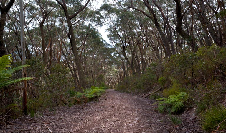 Budawang National Park - Accommodation Fremantle