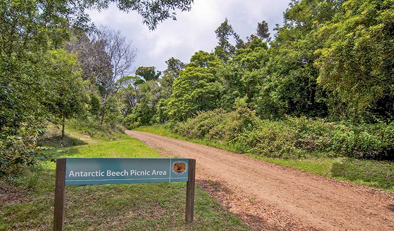 Antarctic Beech picnic area - Accommodation Fremantle