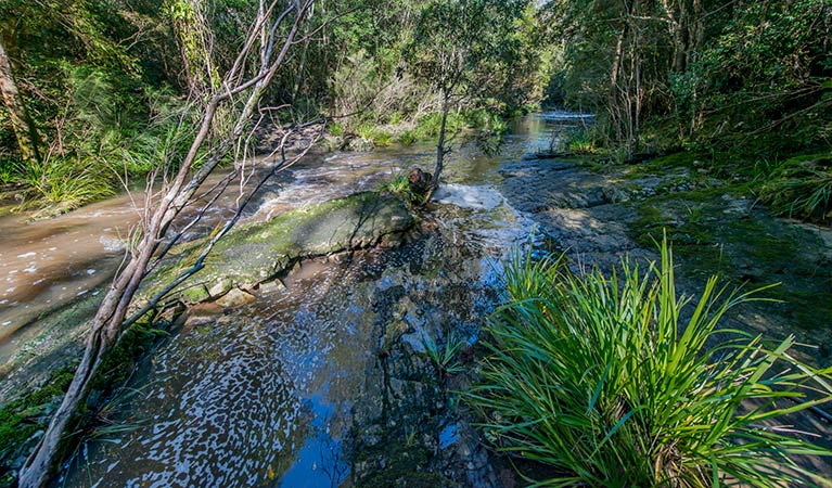 Dawson River walking track - Accommodation Fremantle