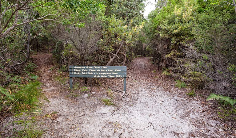 Angophora grove walking track - Accommodation Fremantle