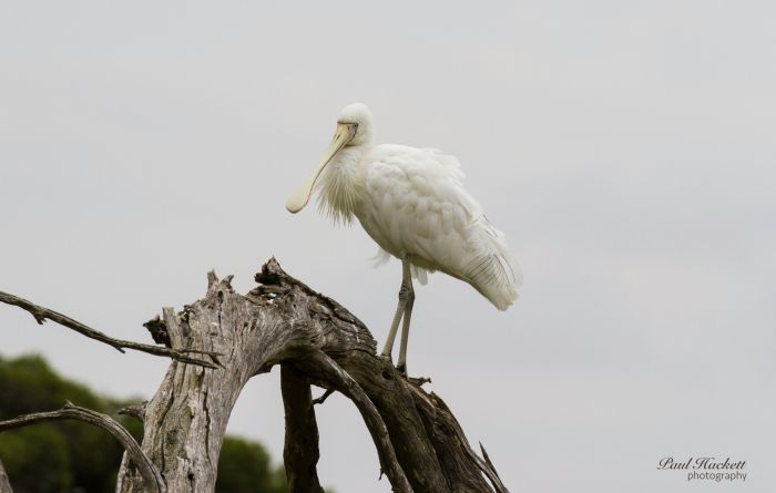 Melbourne Birding Tours - Accommodation Fremantle
