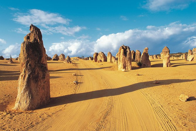 Pinnacles Desert Koalas and Sandboarding 4WD Day Tour from Perth - Accommodation Fremantle