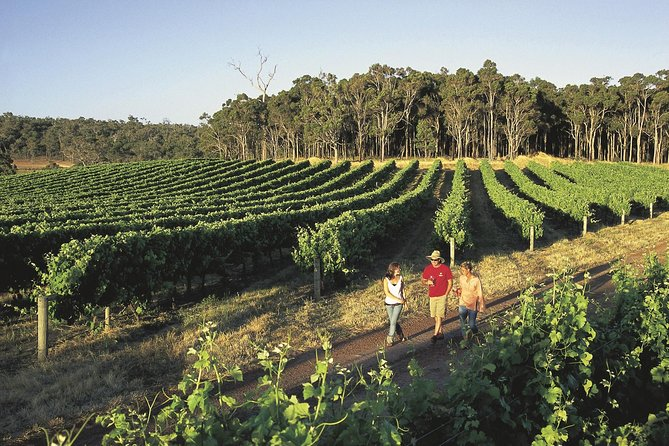 Margaret River Caves Wine and Cape Leeuwin Lighthouse Tour from Perth - Accommodation Fremantle