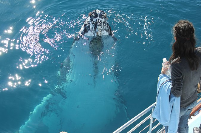 Hervey Bay Premium Whale Watching Cruise
