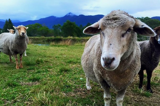 Trevena Glen Farm Animal Experience - Accommodation Fremantle