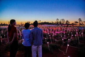 Uluru Field of Light Sunrise Tour - Accommodation Fremantle