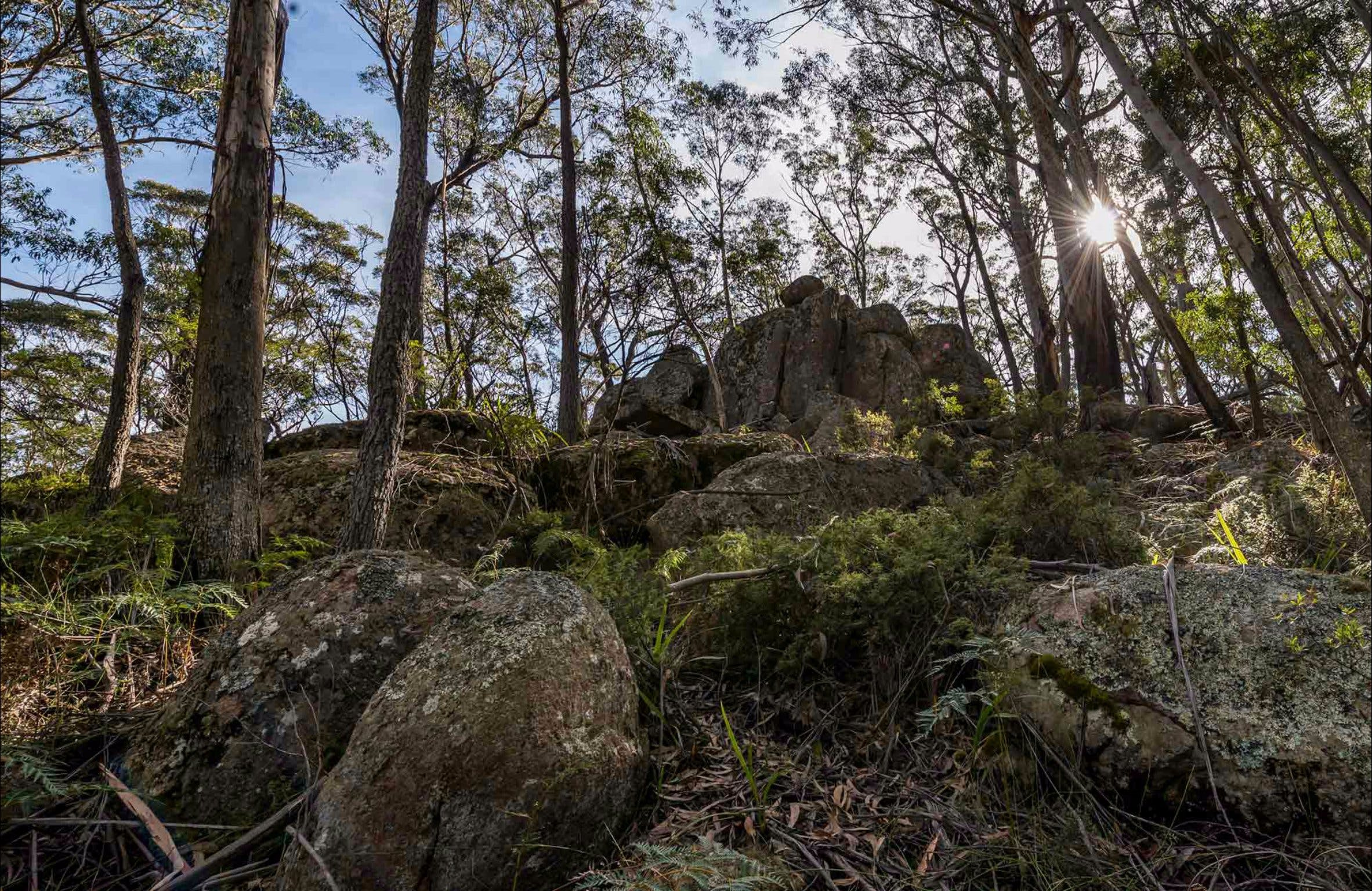 Pheasants Peak Walking Track - Accommodation Fremantle
