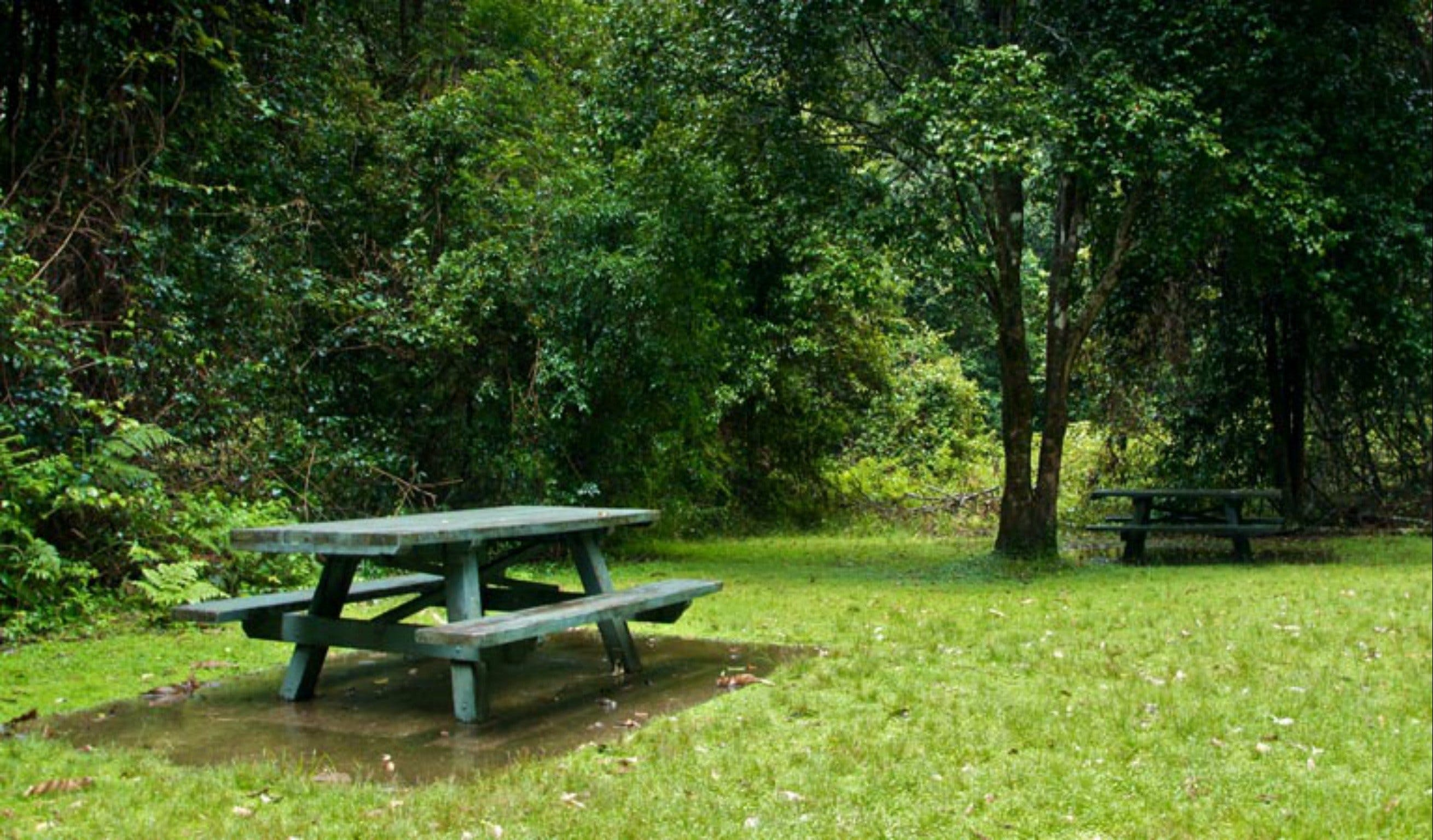 Williams River picnic area - Accommodation Fremantle