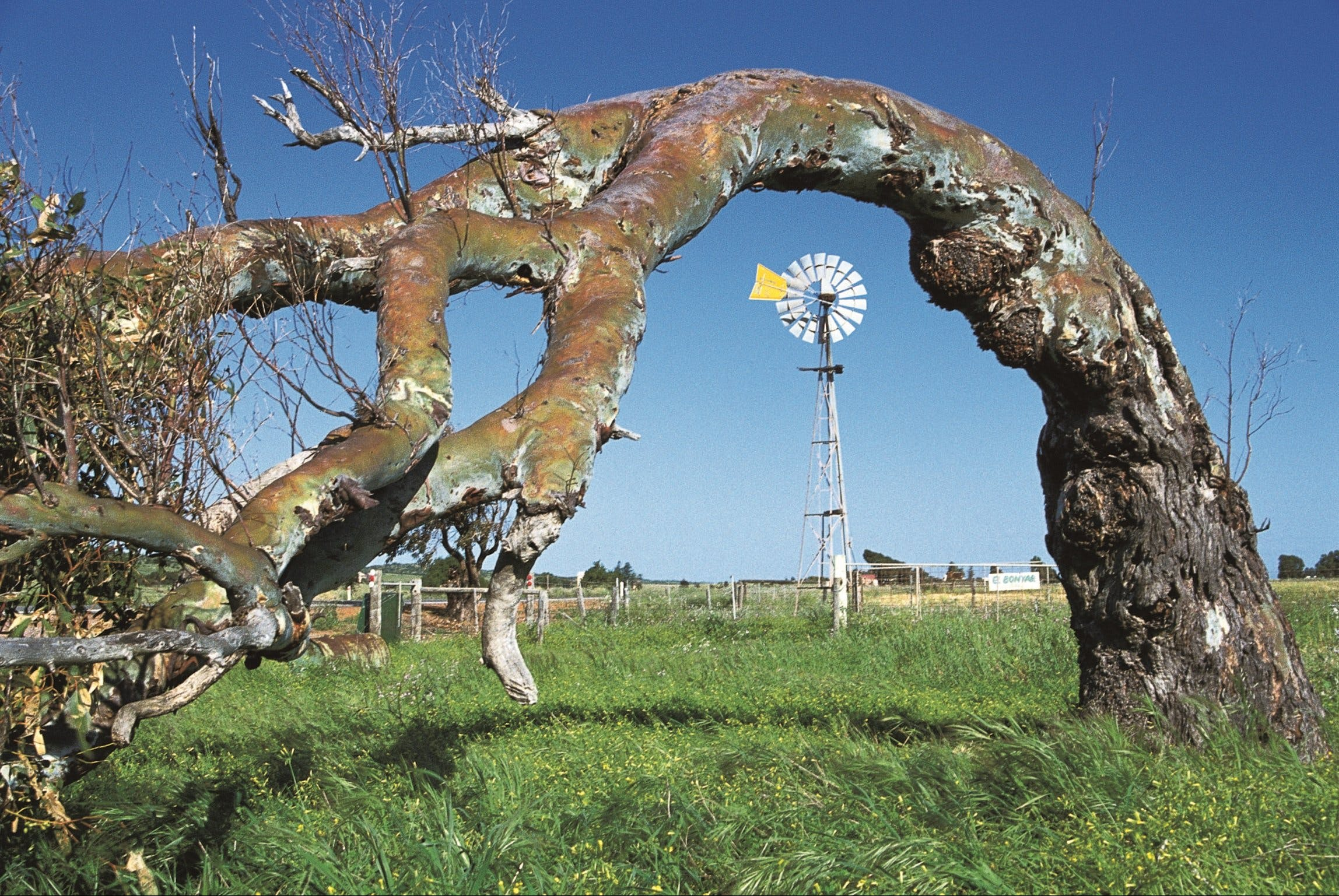 Greenough Leaning Trees - Accommodation Fremantle