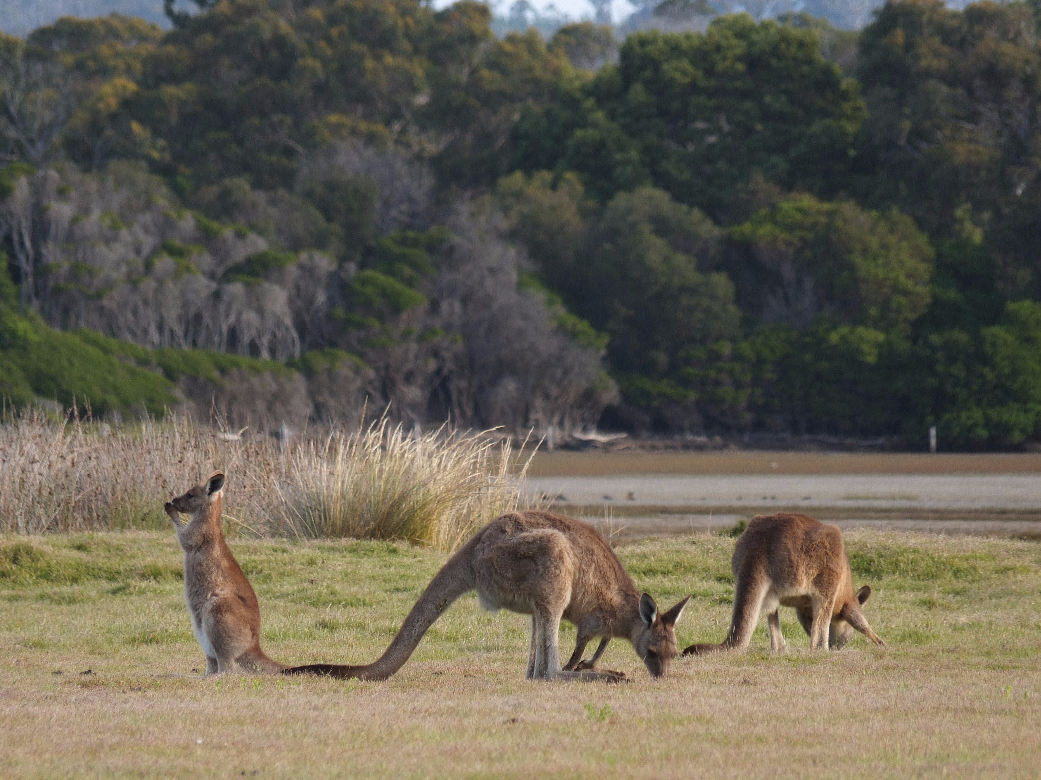 Great Nature Trail - Accommodation Fremantle