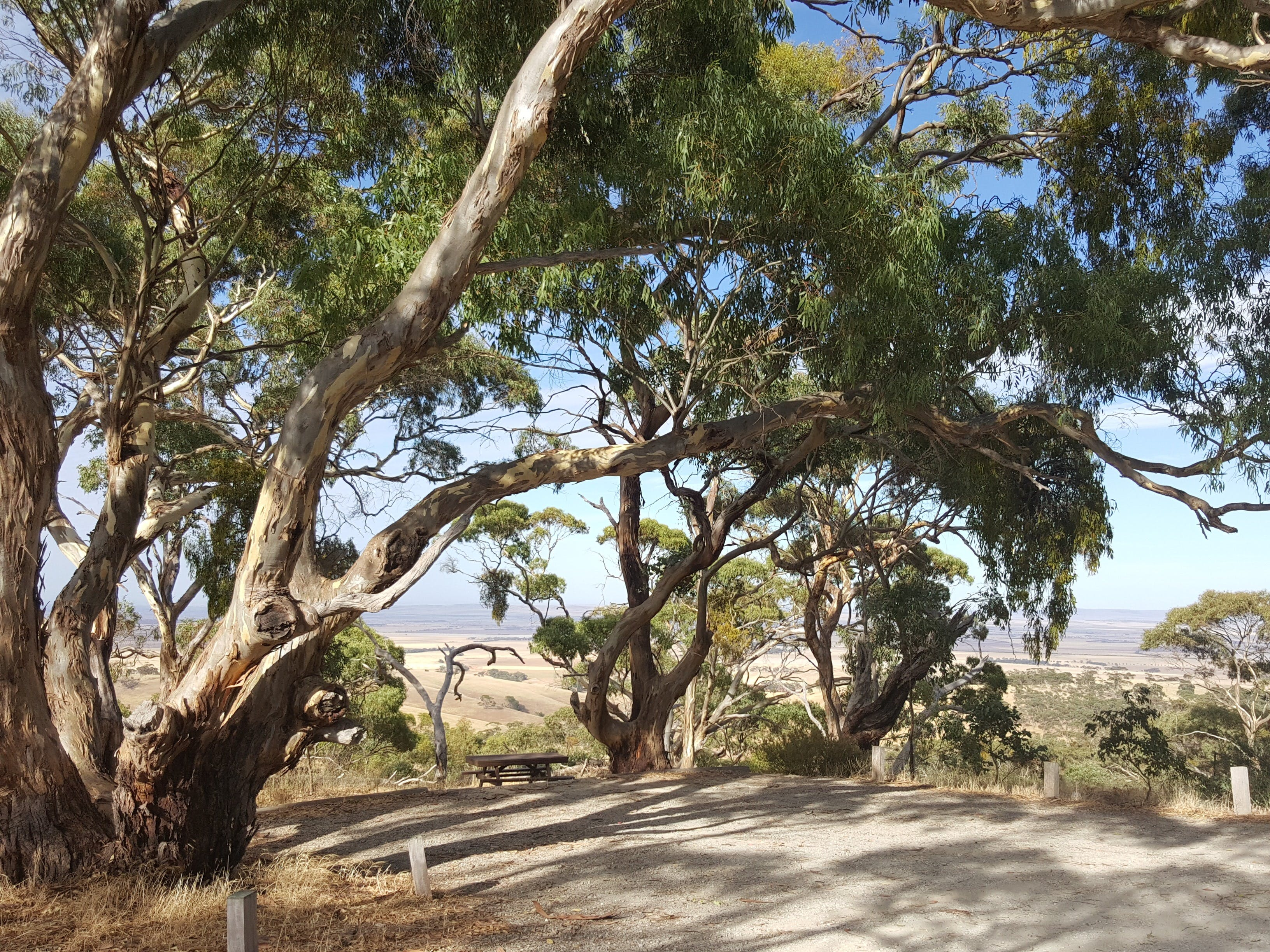 Spring Gully Conservation Park - Accommodation Fremantle