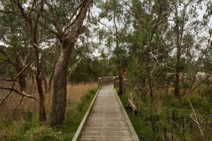 The Briars Park Walking Trails - Accommodation Fremantle