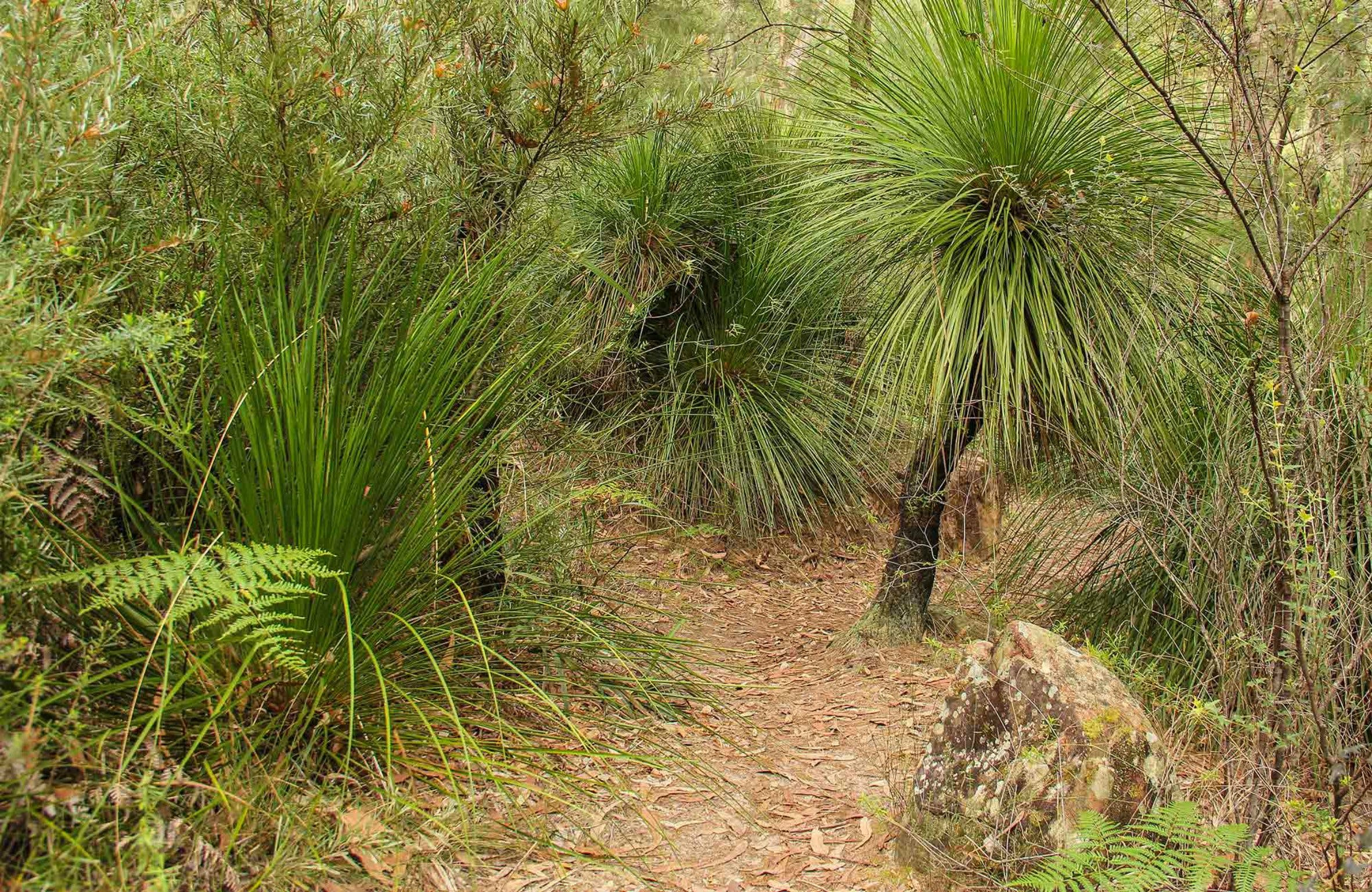 Grass Tree Circuit - Accommodation Fremantle