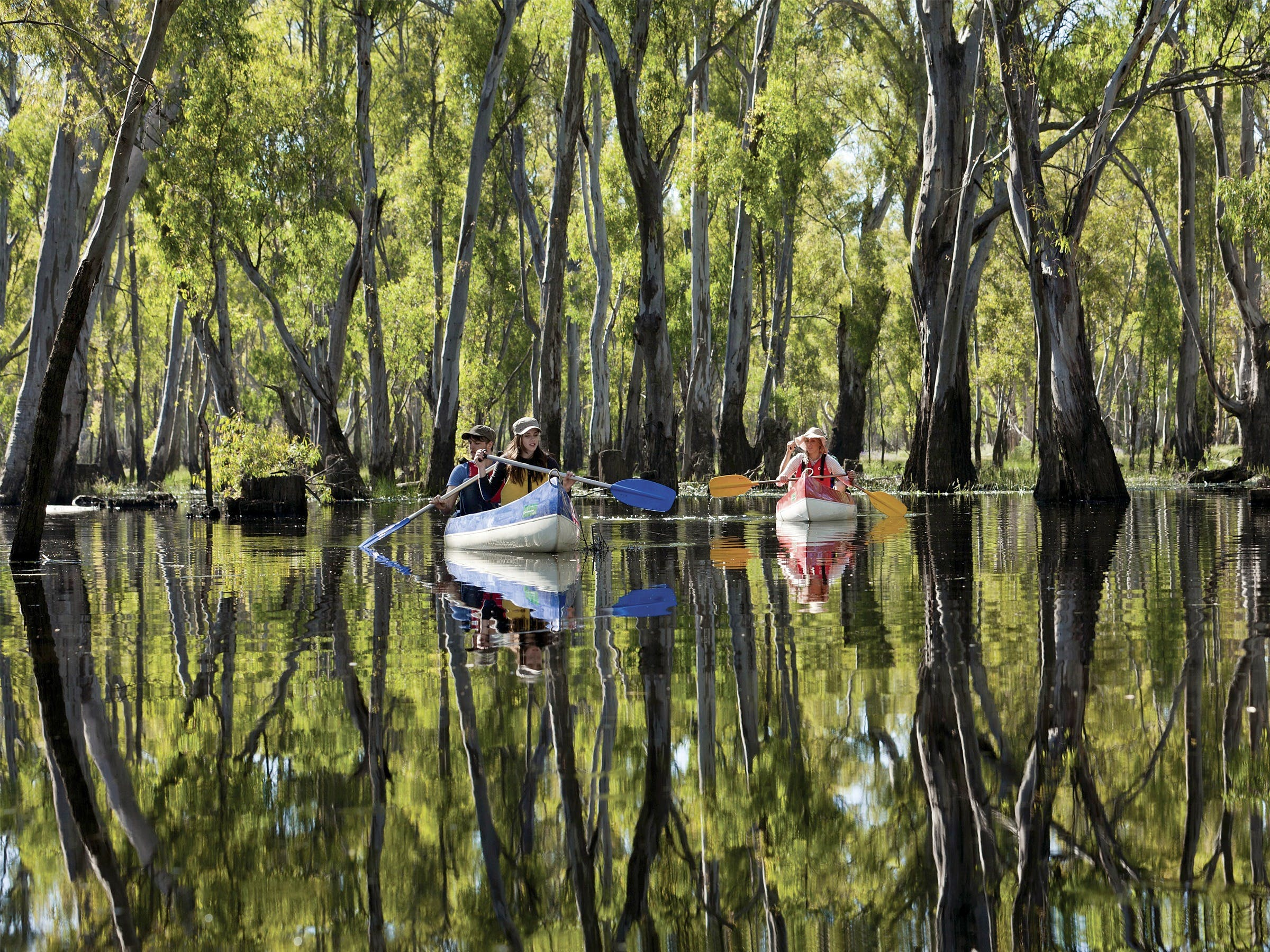 Murray River canoe trails - Accommodation Fremantle