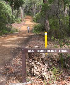 Old Timberline and Sidings Rail Trails - Accommodation Fremantle