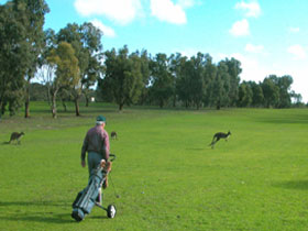 Coffin Bay Golf Club - Accommodation Fremantle