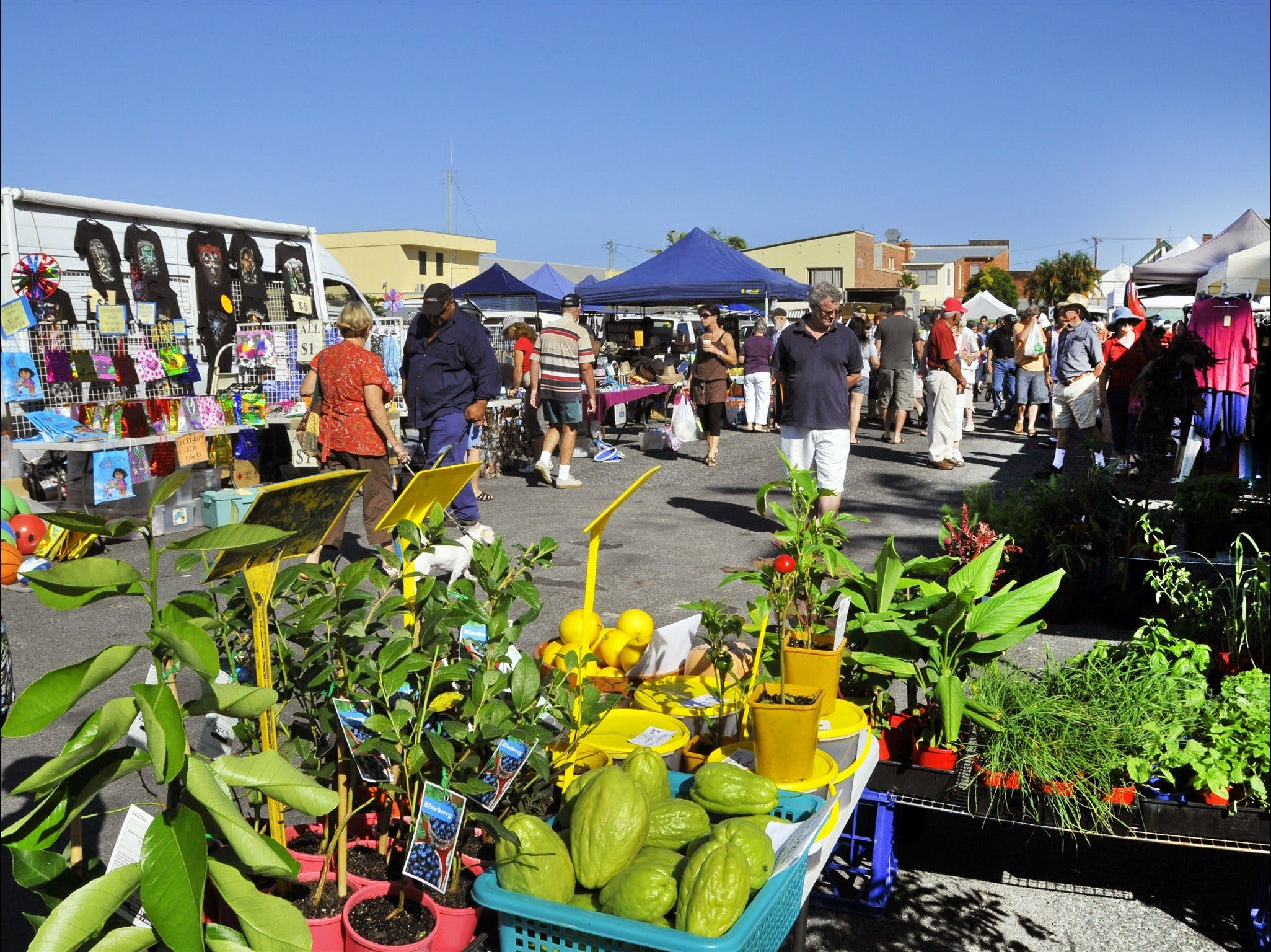 Maclean Community Monthly Markets - Accommodation Fremantle