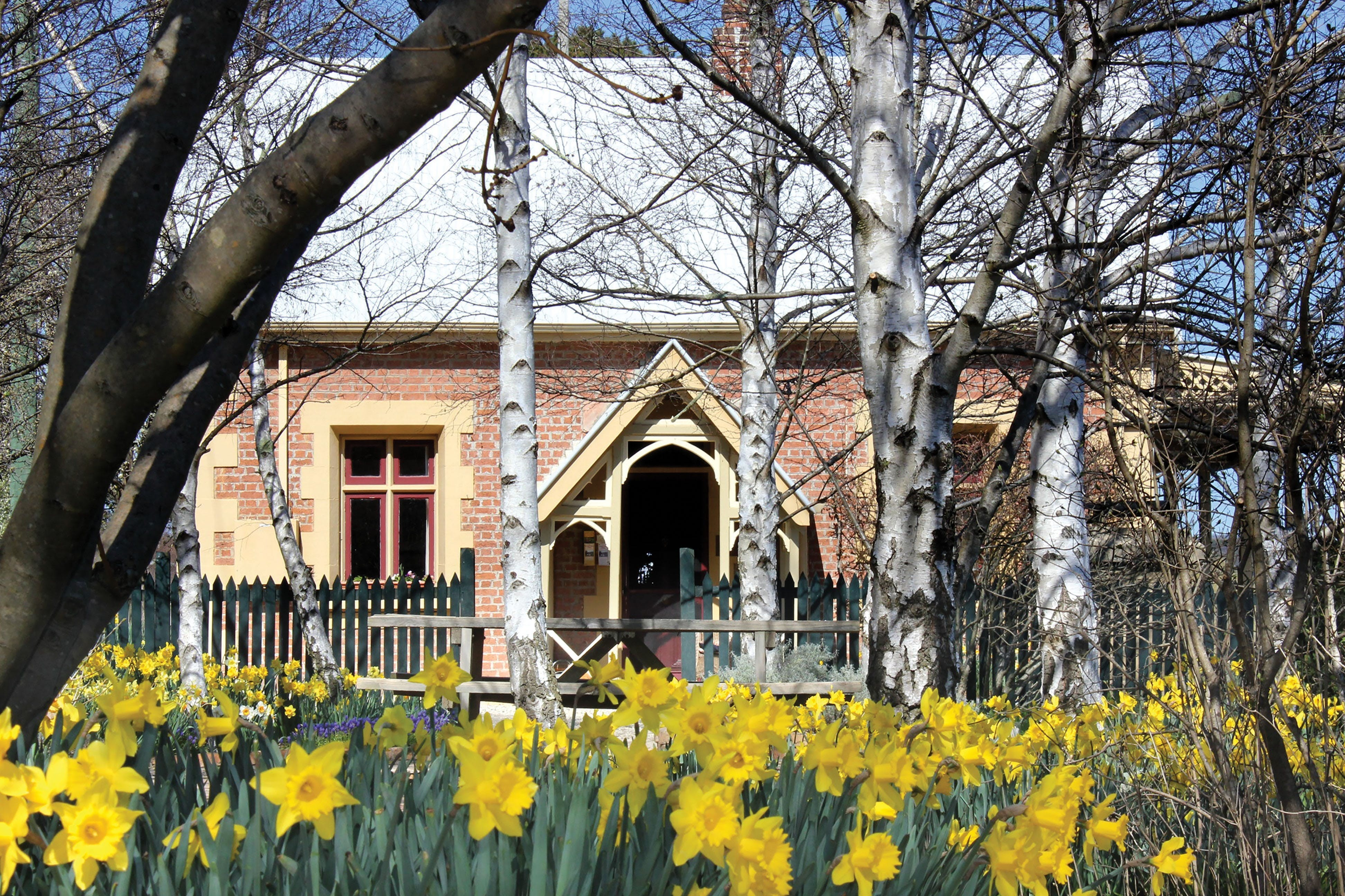 Daffodils at Rydal - Accommodation Fremantle