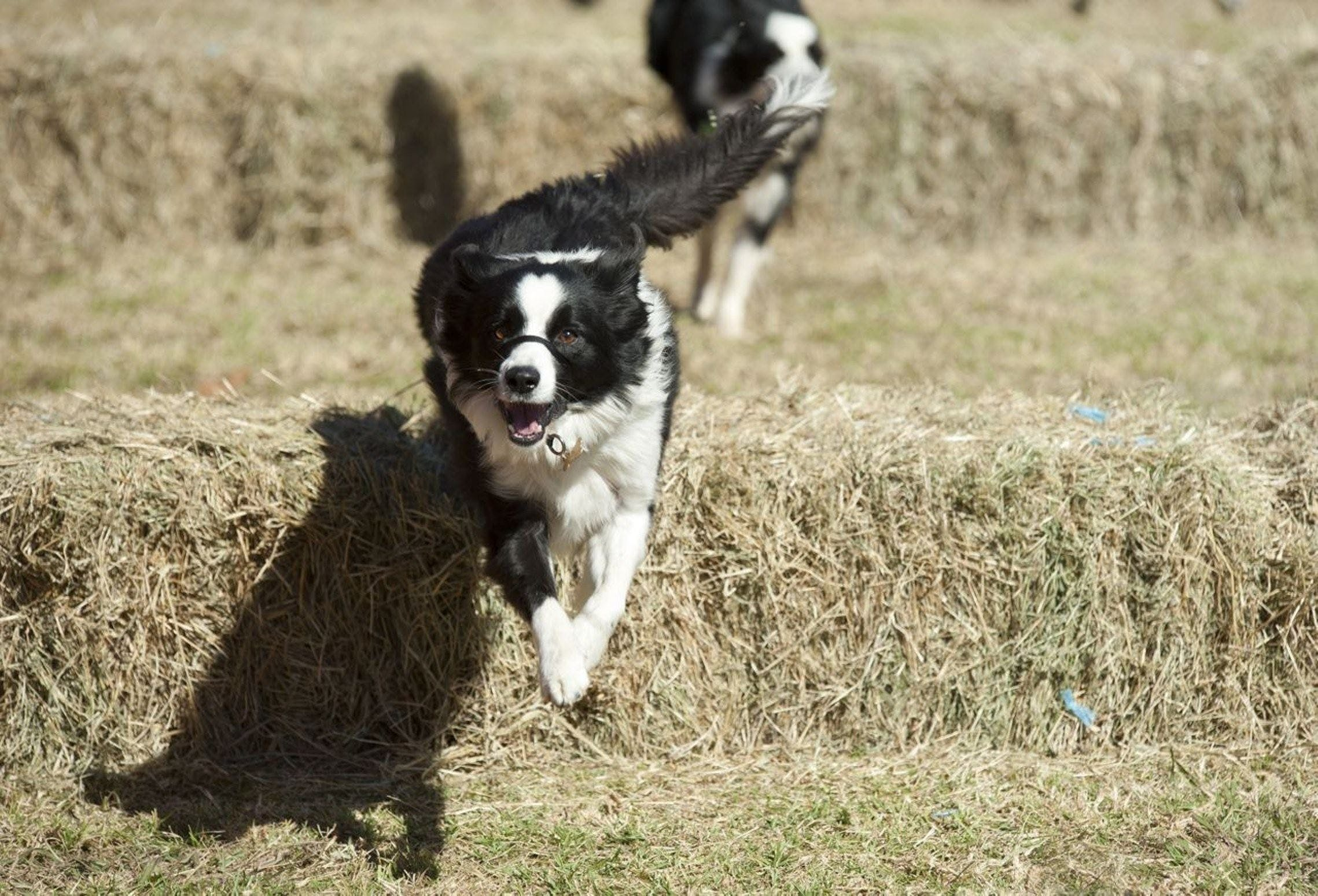 Great Nundle Dog Race - Accommodation Fremantle