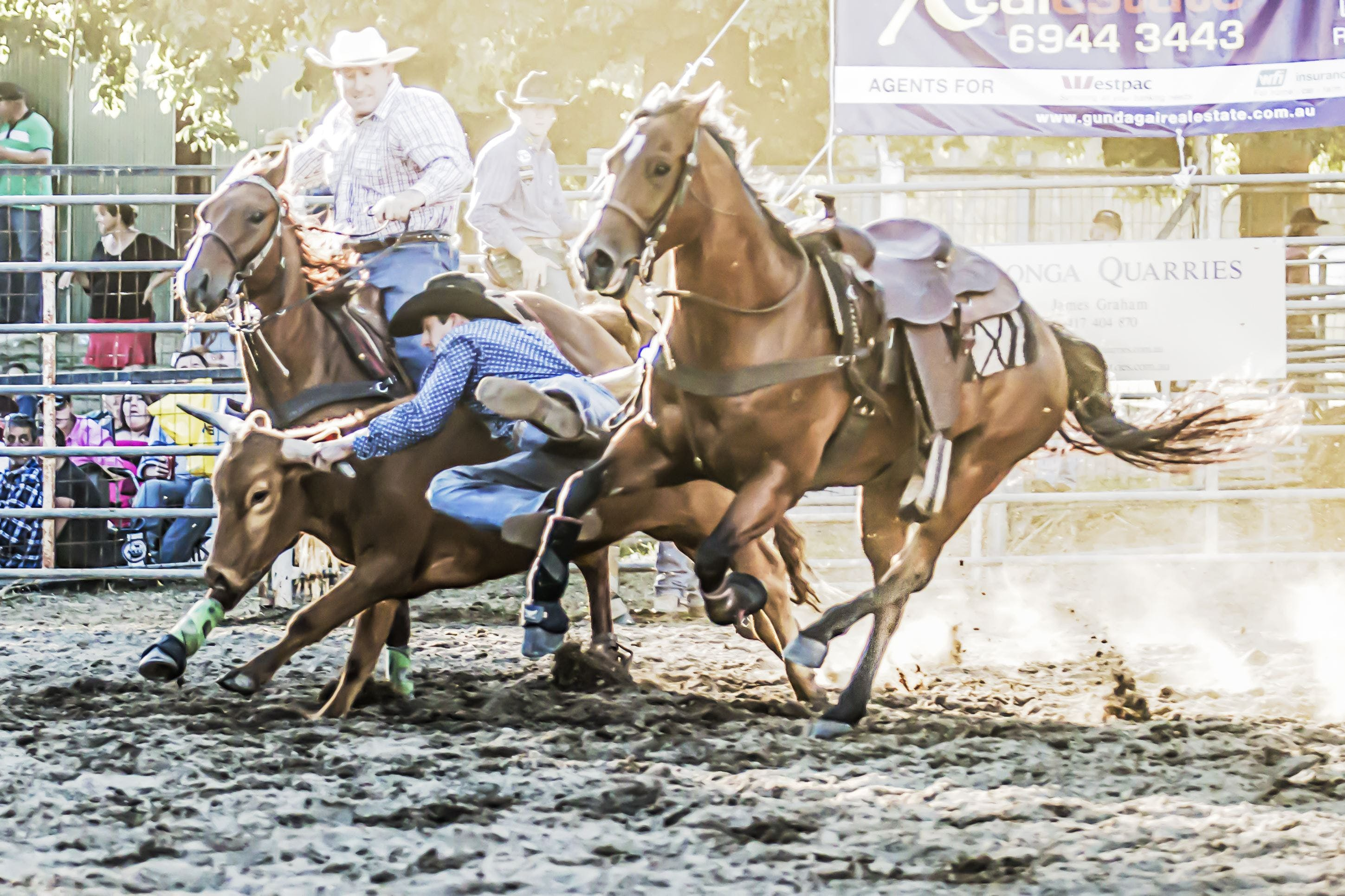 Gundagai Rodeo - Accommodation Fremantle